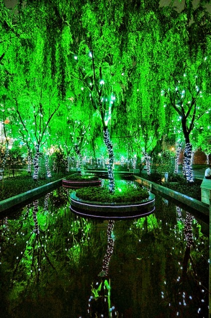 Magic-Forest-in-Shanghai.jpg